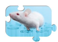 Leincos monoclonal antibody development - puzzle