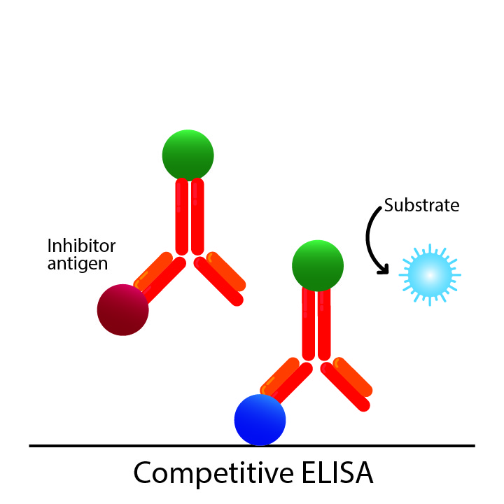 Competitive ELISA diagram