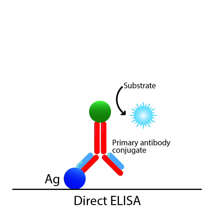 Direct ELISA diagram