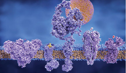 3D rendering of different structures of membrane proteins; molecular model