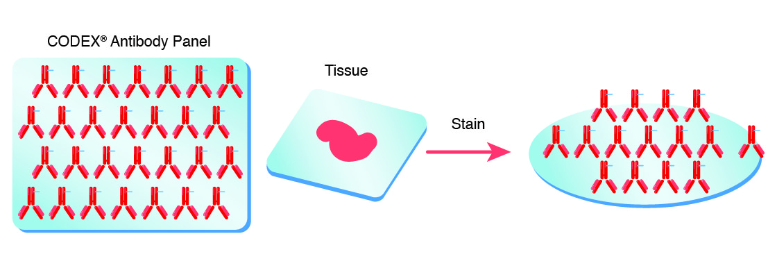 Single-step staining to preserve sample integrity