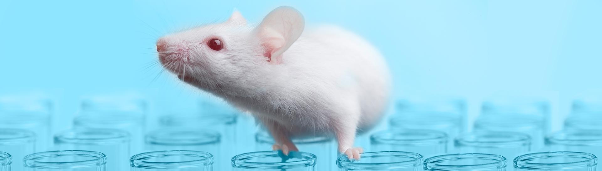Monoclonal Antibodies_Mouse