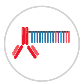 Antibody Barcoding Process