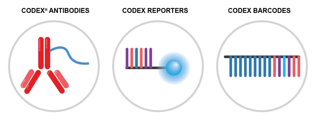 CODEX Technology - Three components