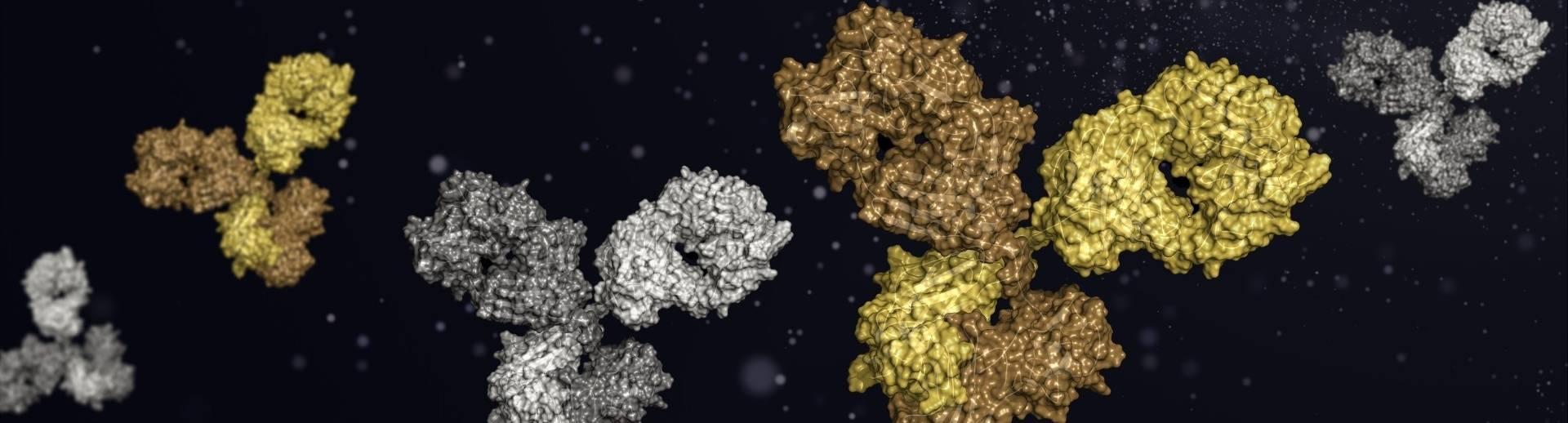 In Vivo Functional Grade Antibodies