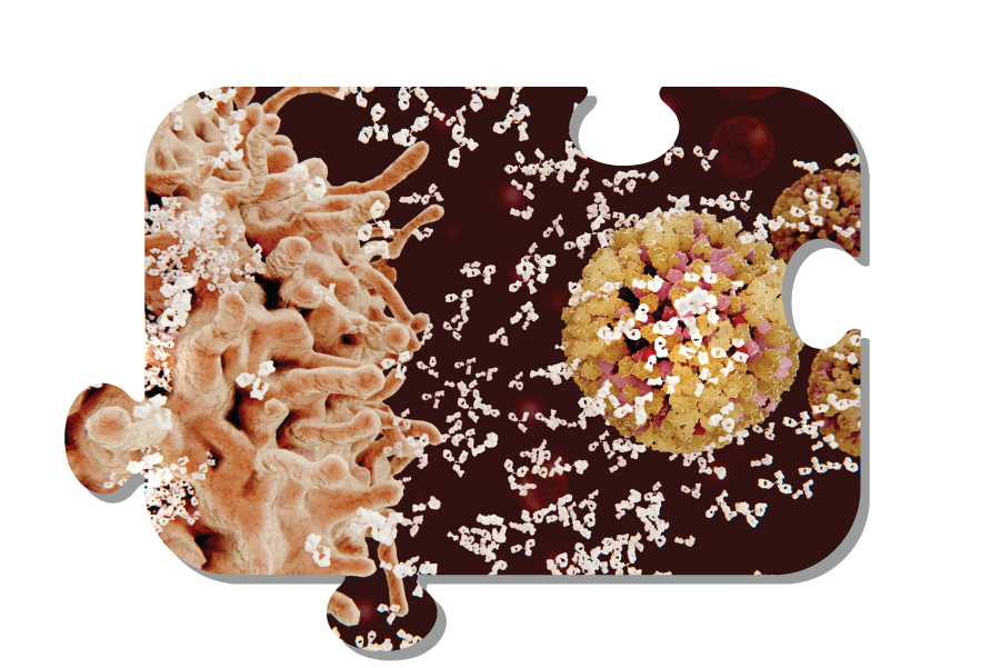 Immune cell specific depletion antibodies