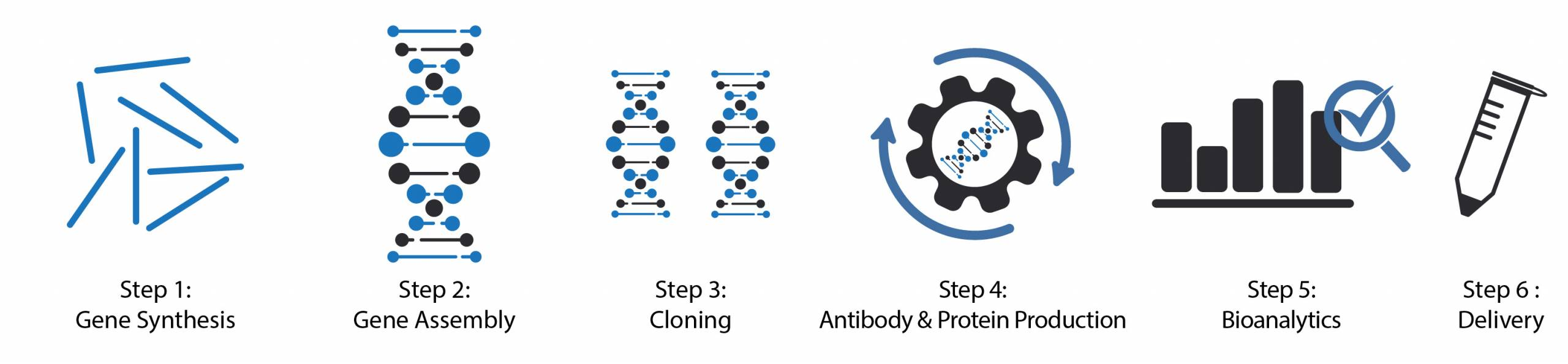 Recombinant Antibody, Transient Expression, Gene Synthesis, Cloning, Antibody and Proteins